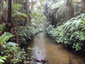 Webb Creek